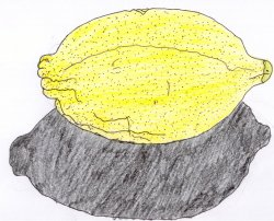 Pale yellow oval acid-juiced fruit used for flavouring and for making the beverage Lemonade.